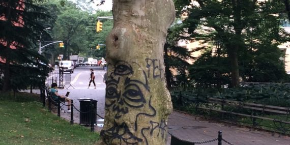 A tree spray painted in Washington Square Park