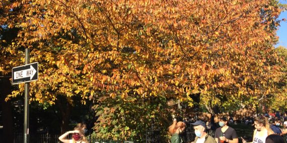 Yoshion cherry, fall foliage, Nov 2020, Washington Square Park