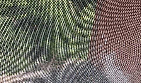 three red-tailed hawk eggs in a nest on a window ledge with tree canopy in the background