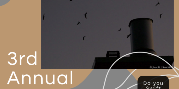 """Image of swifts entering a chimney, swift with speech bubble"""" Do you swift NYC?"""", WSp Eco Projects logo, and text: Swift Night Out: Count the Birds!"""